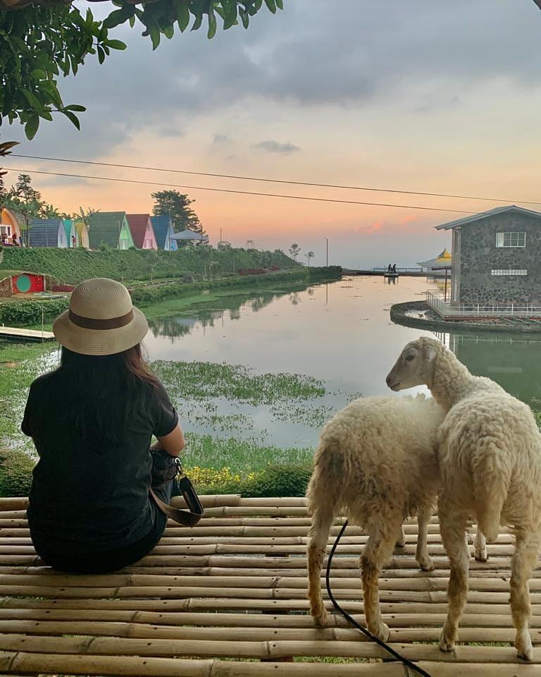 sheep park