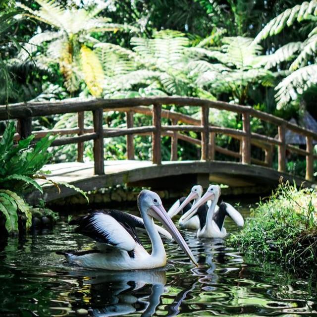 lokasi tasta wildlife park tabanan bali